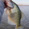 A Few Tips for Fishing for Crappie