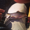 Christopher Arnold's photo