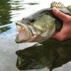 How can I catch large mouth bass in the summer?