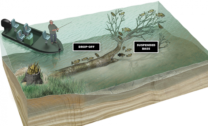 Sweet Spots for Largemouth Bass